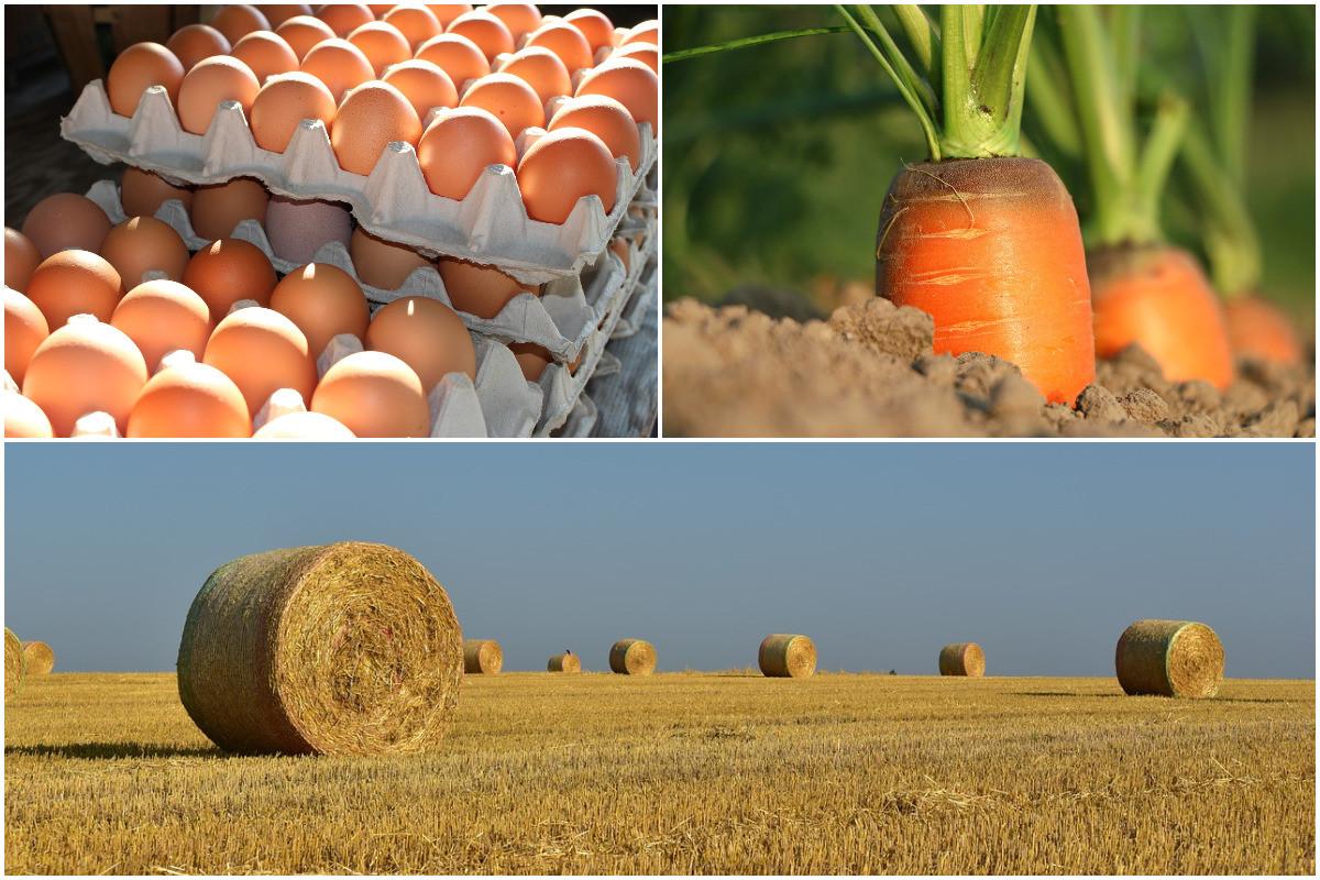 Votations: notre débat sur les initiatives agricoles