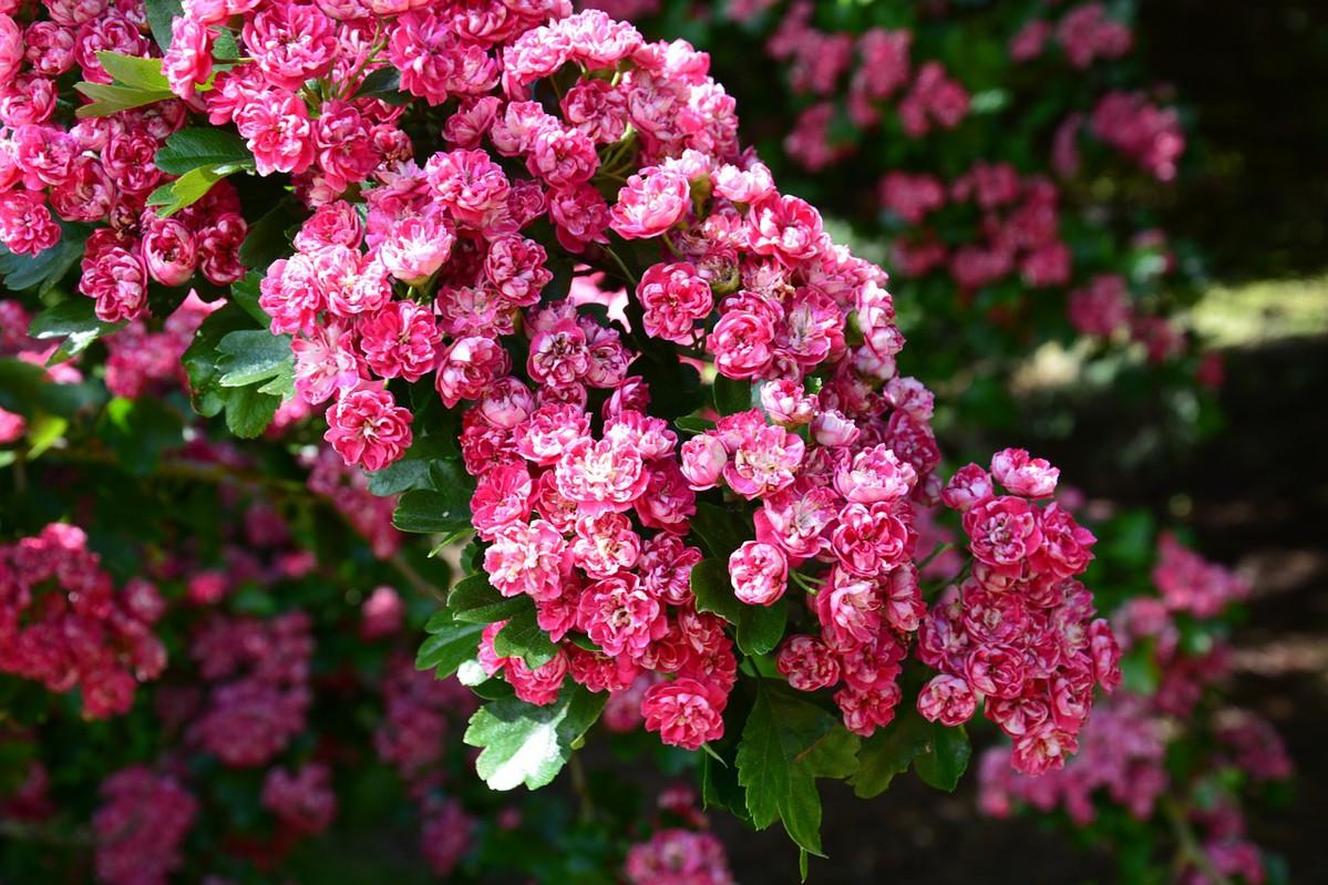 Du soleil pour embellir vos jardins !